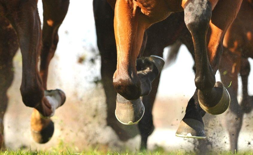 Foto safari i jahanje konja