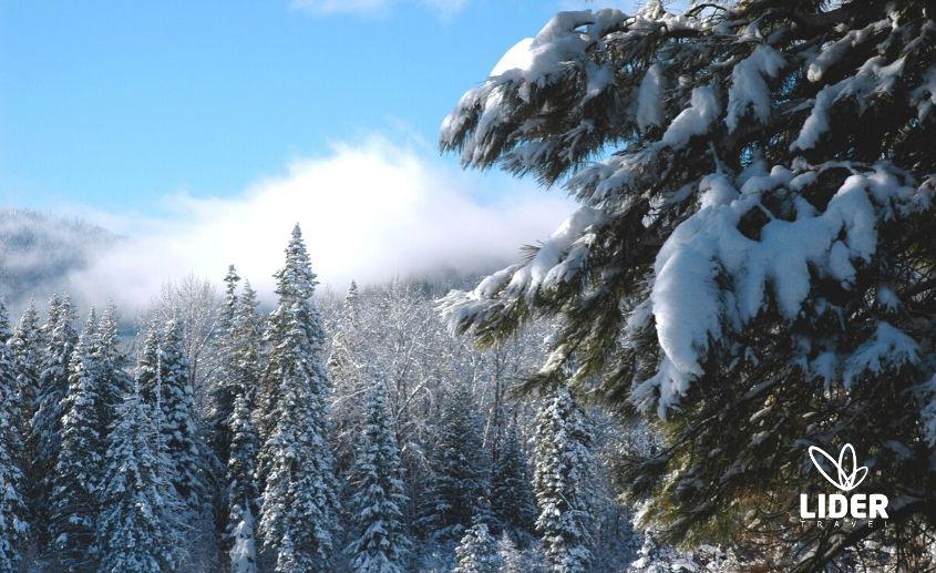 Jahorina skijanje