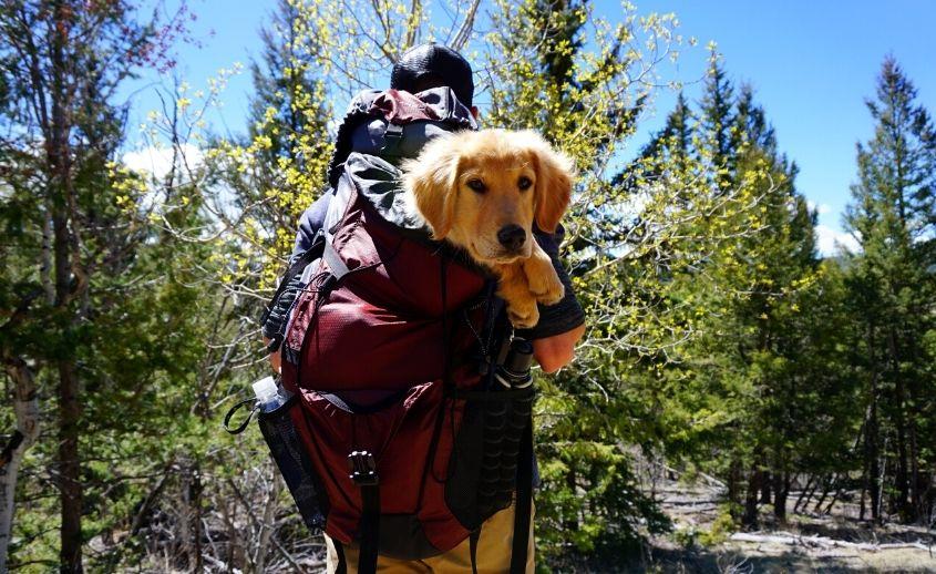 Hiking i trakking