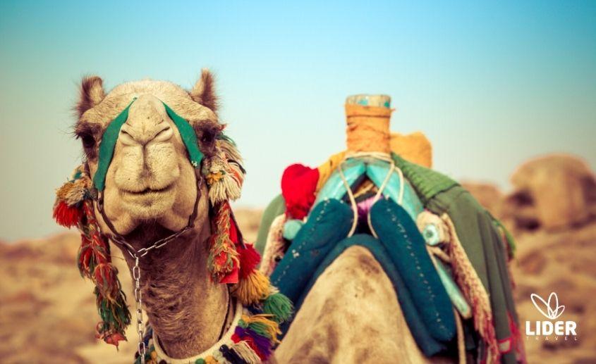 Hurgada i Egipat Česta pitanja