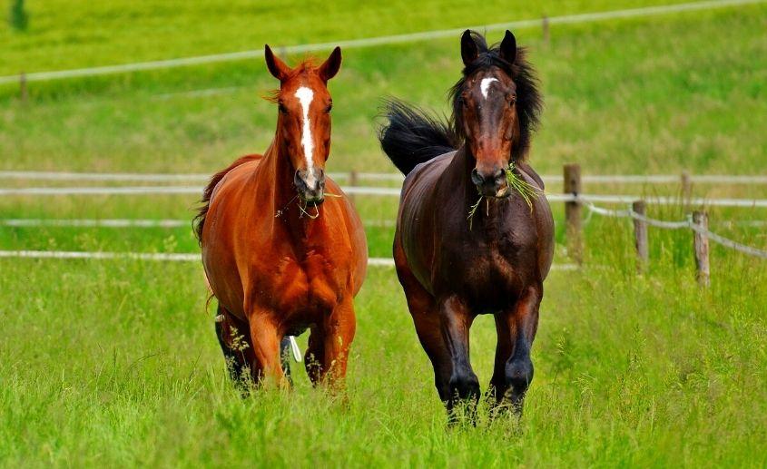 Jahanje konja i foto safari