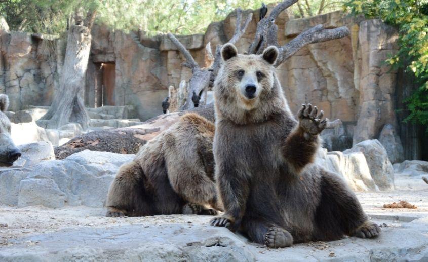 budimpesta zoo vrt